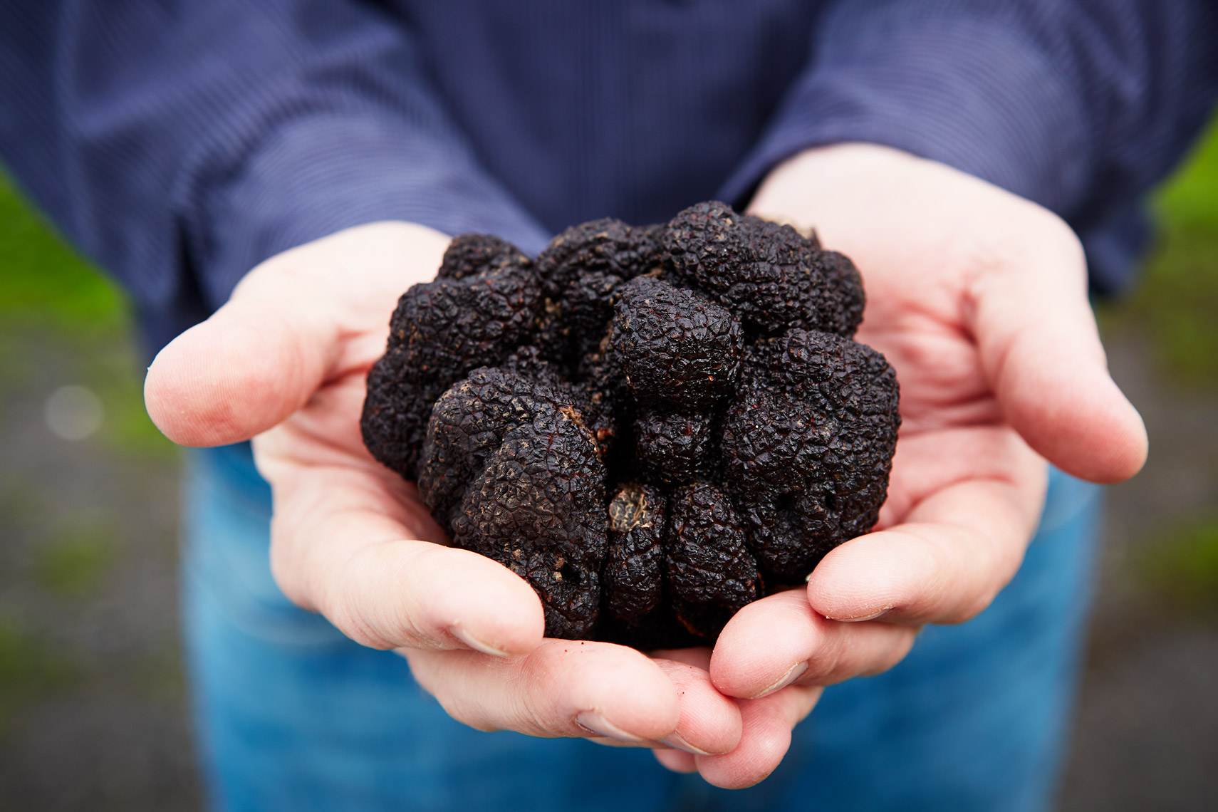 AlanCampbellPhotography large black truffle in hands