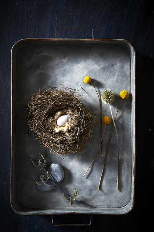 AlanCampbellPhotography, still life with a bird nest