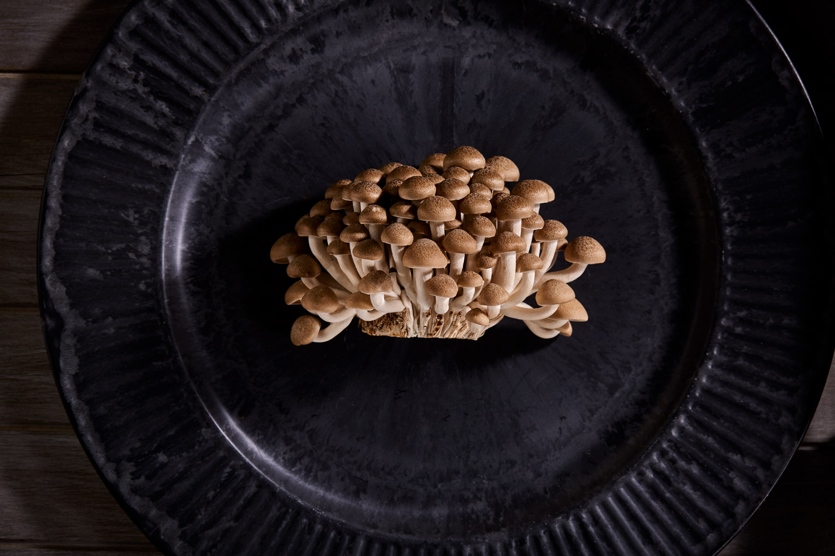 AlanCampbellPhotography, Brown Clam Shell mushrooms still life