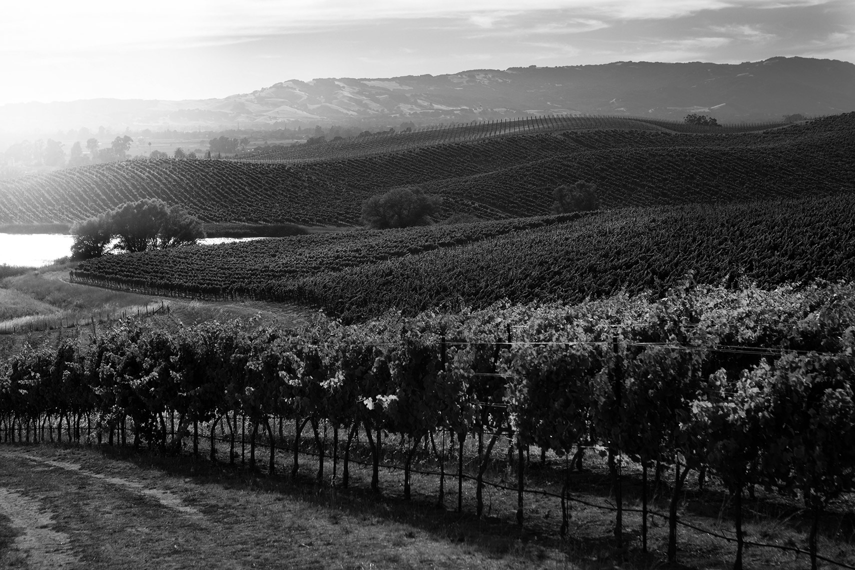 AlanCampbellPhotography, Carneros hills vineyard shot