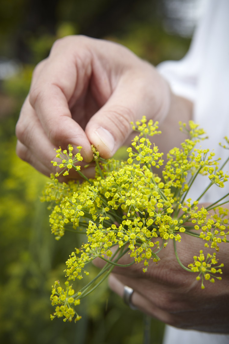 AlanCampbellPhotography, fennel flowers for the chef