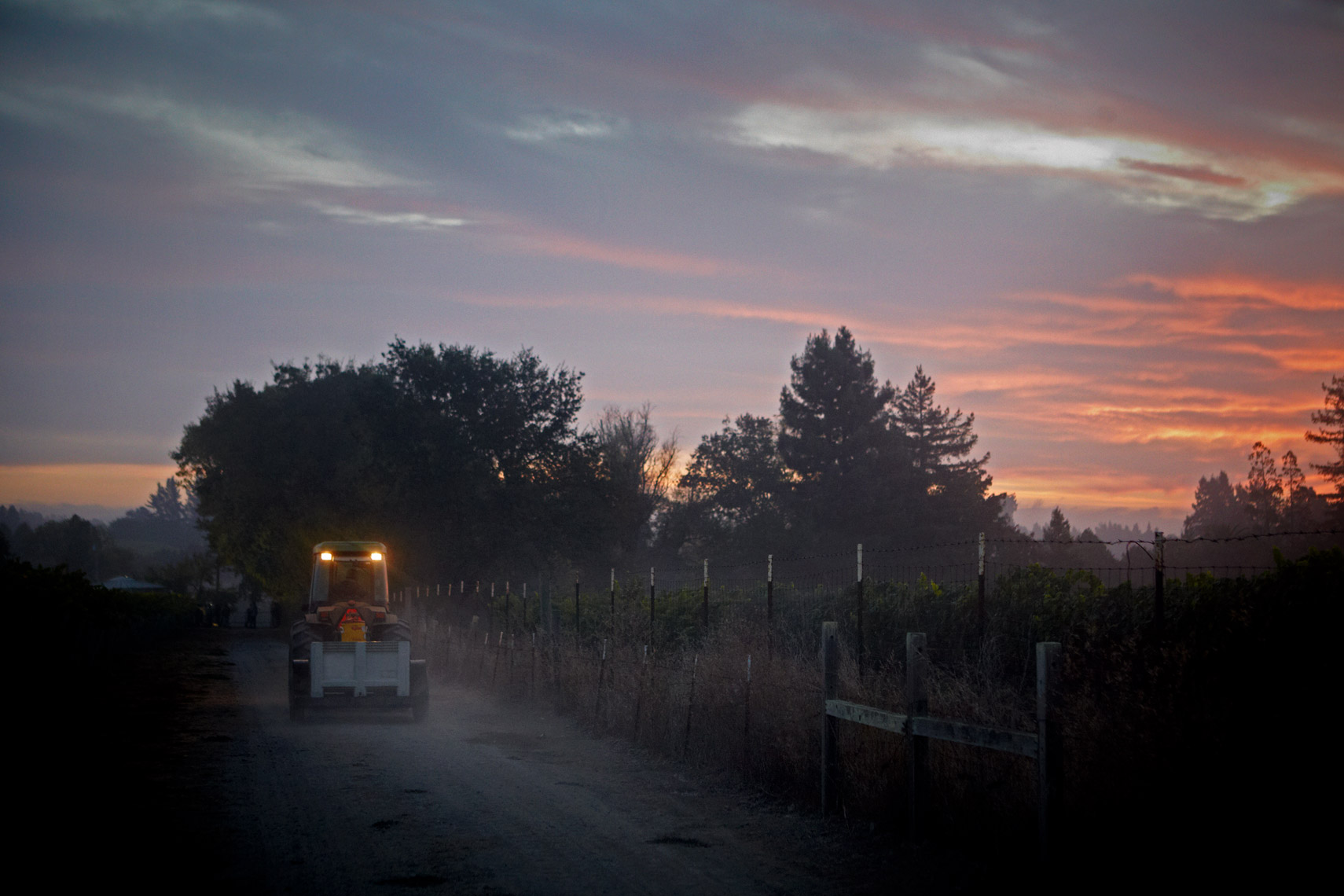 AlanCampbellPhotography, dawn in the vineyard during harvest