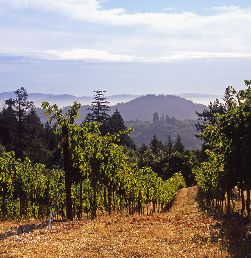 AlanCampbellPhotography, scenic vineyard MendoRidge