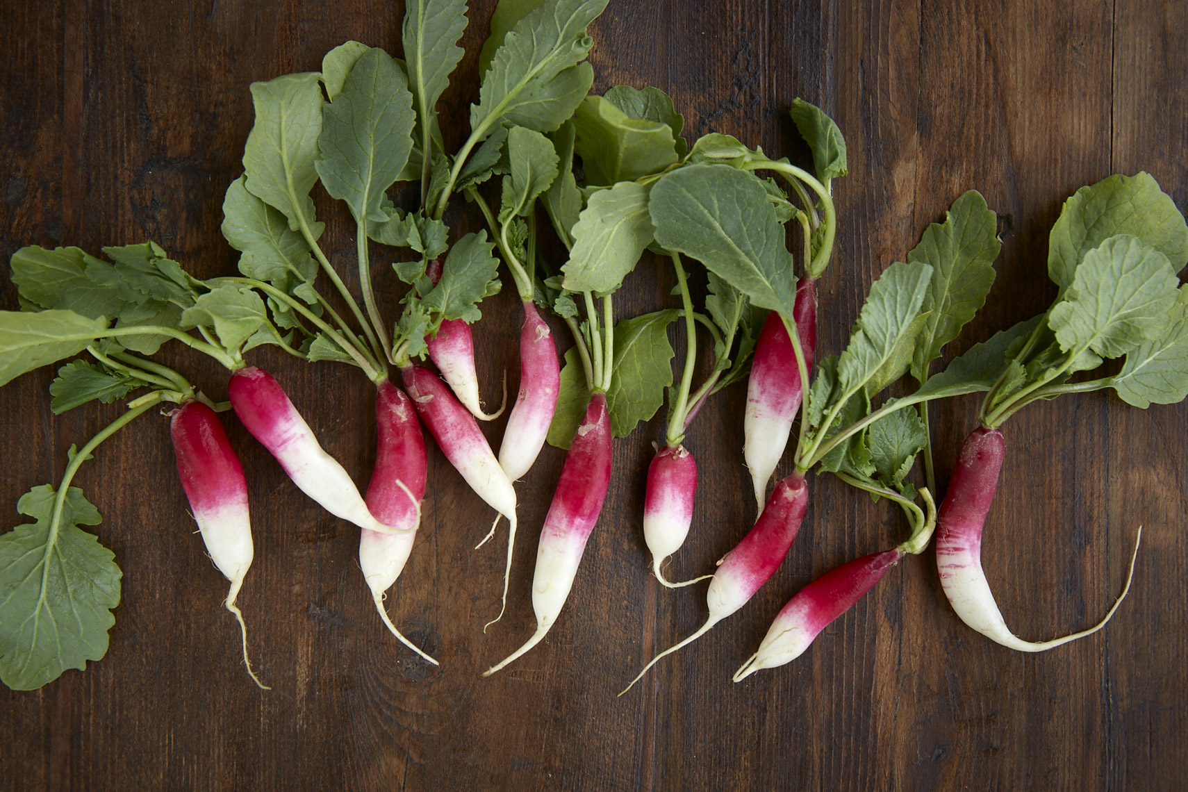 AlanCampbellPhotography, fresh ingredients from the garden Radishes