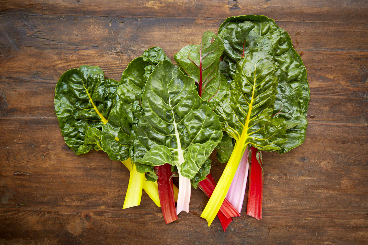 AlanCampbellPhotography,  fresh ingredients  from the garden Rainbow-Chard