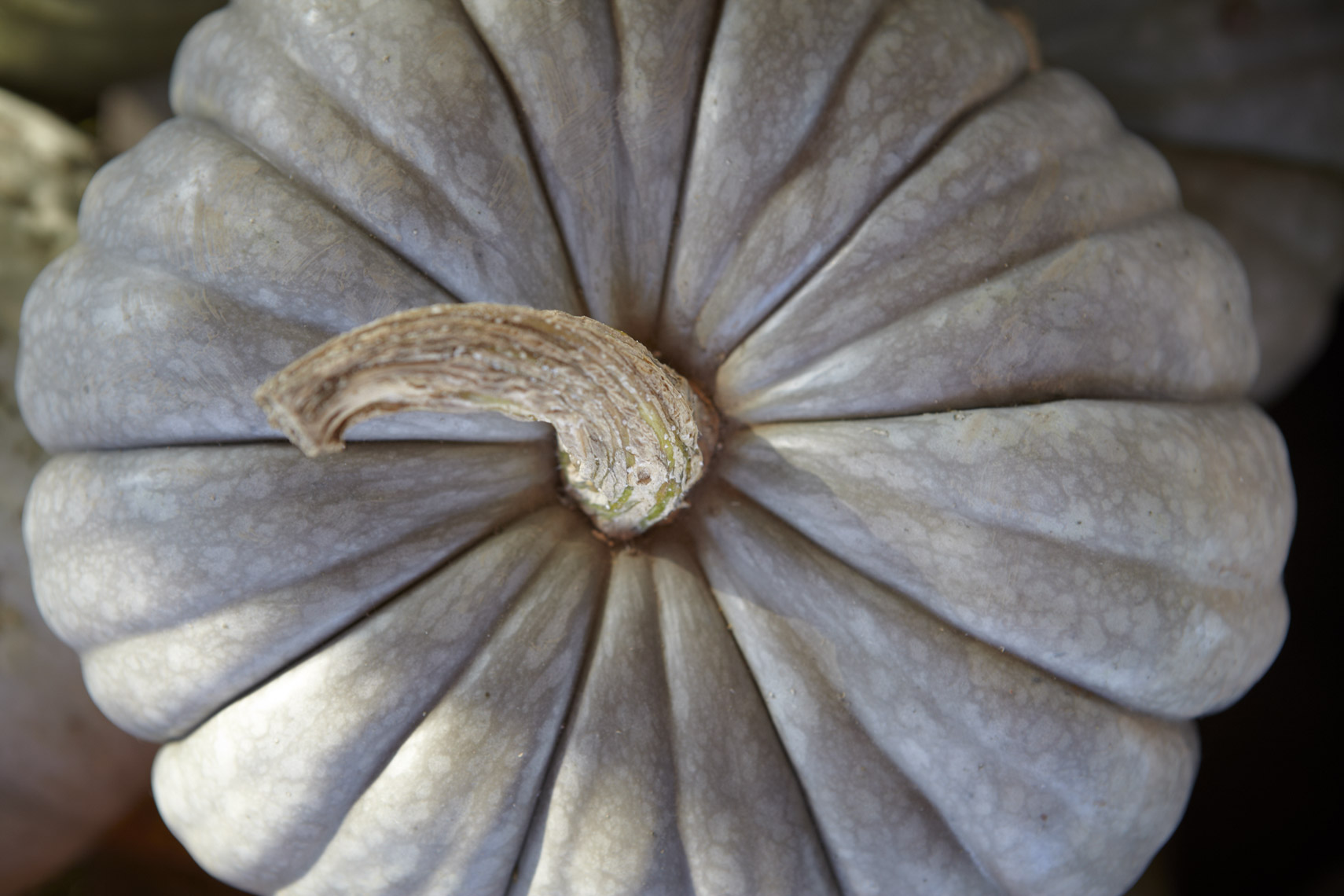 AlanCampbellPhotography, ingredients sonom county Winter-Squash