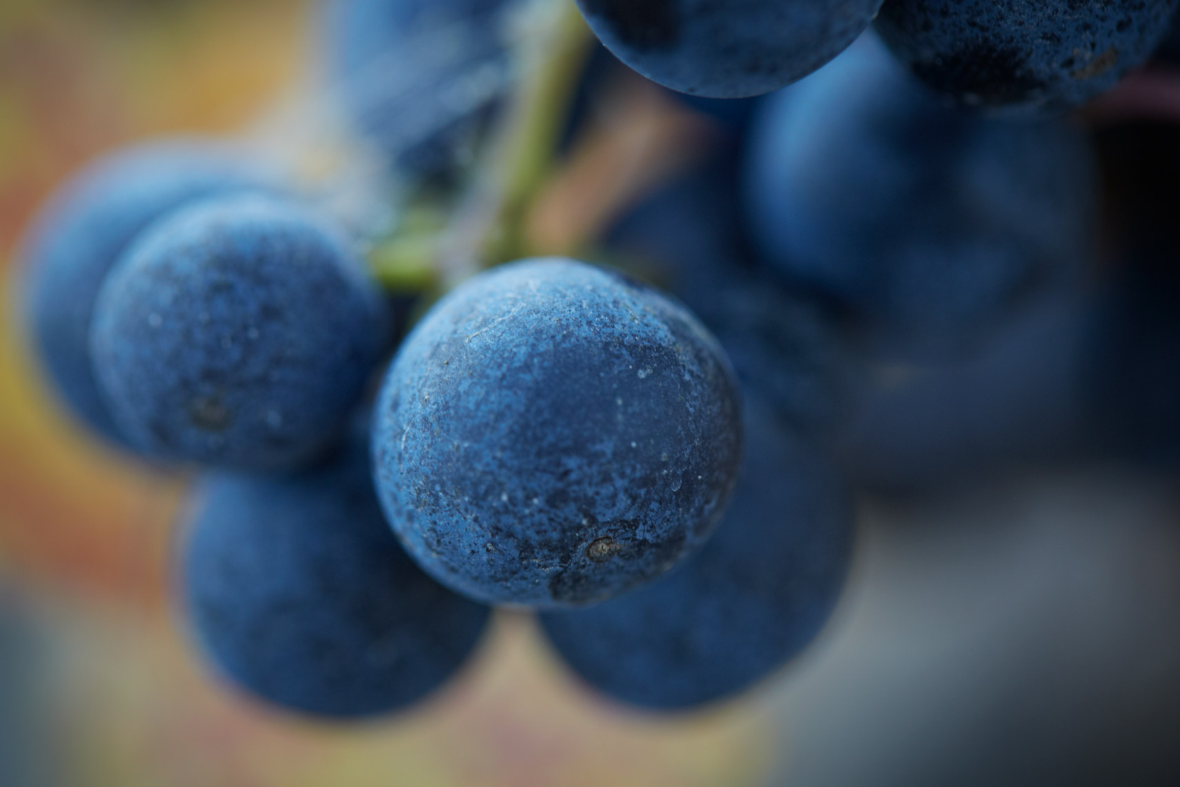 AlanCampbellPhotography, close up of grape