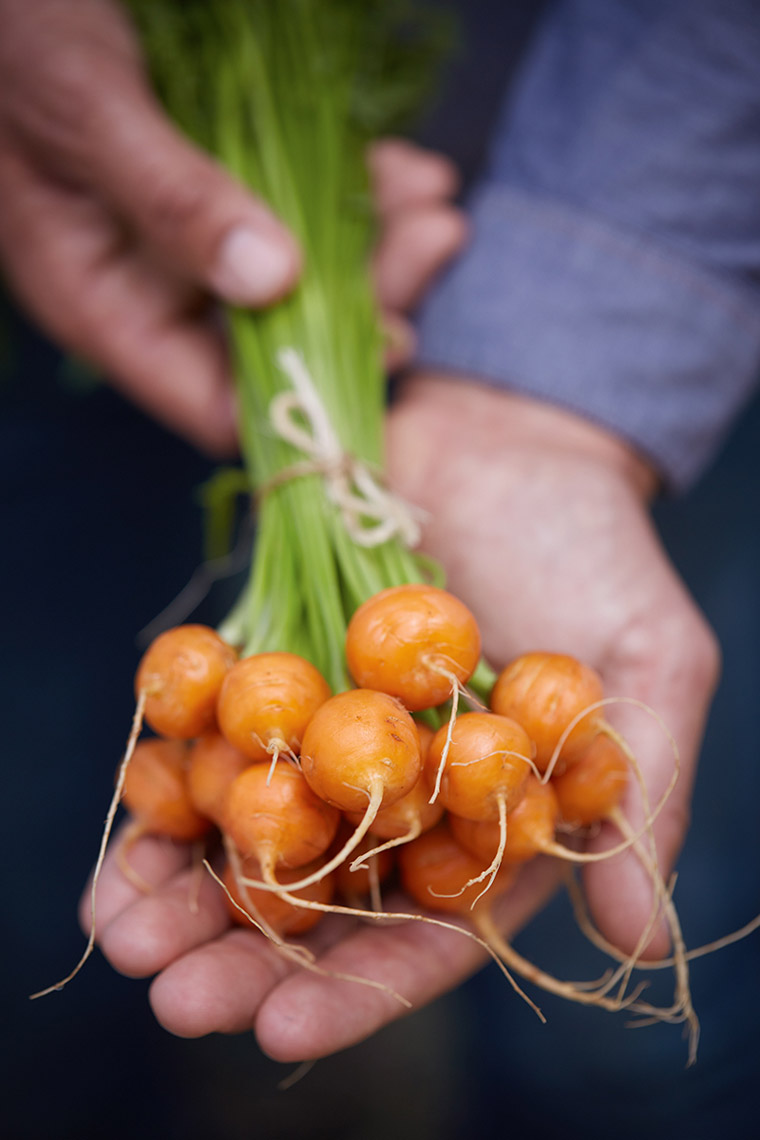 AlanCampbellPhotography, carrots in hand from the garden