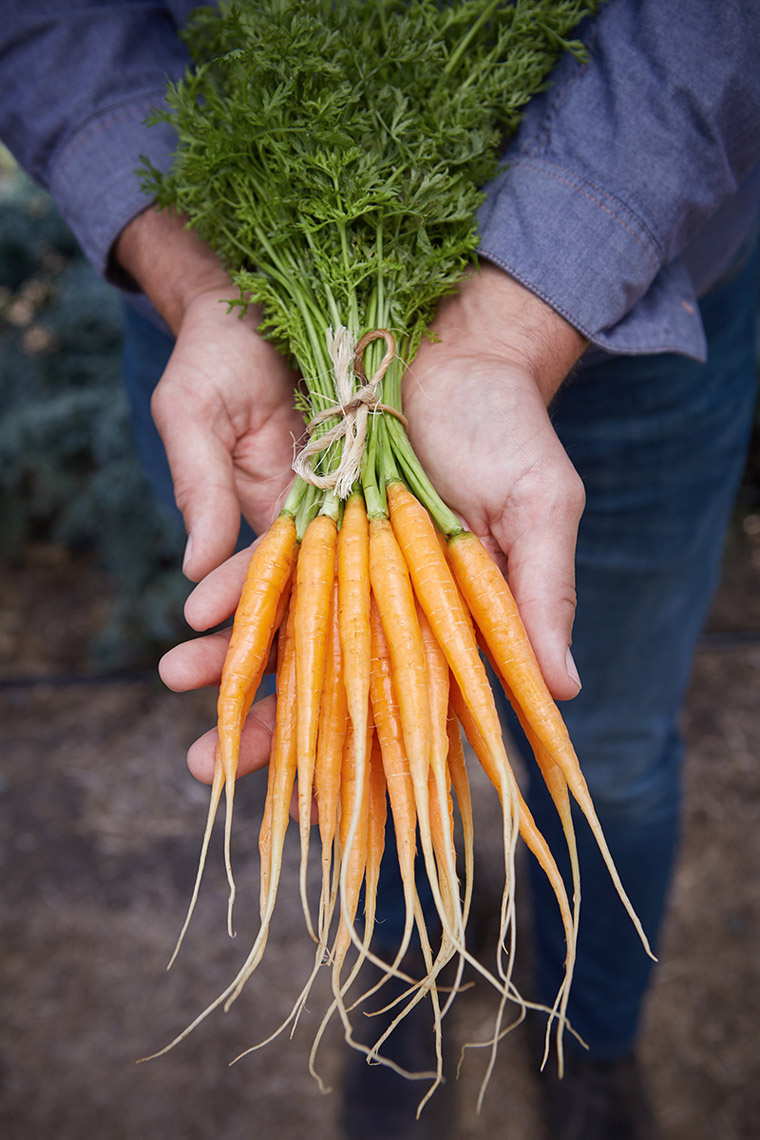 AlanCampbellPhotography, amazing carrots fresh from the garden